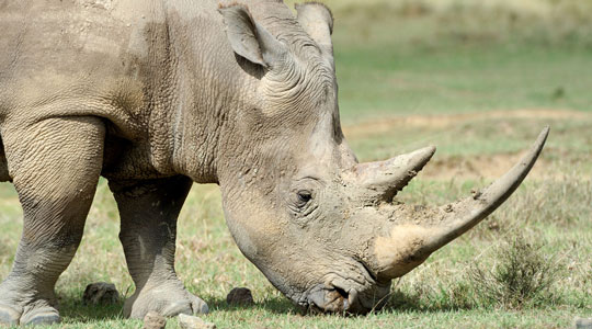 The Forever Wild Rhino Protection Initiative